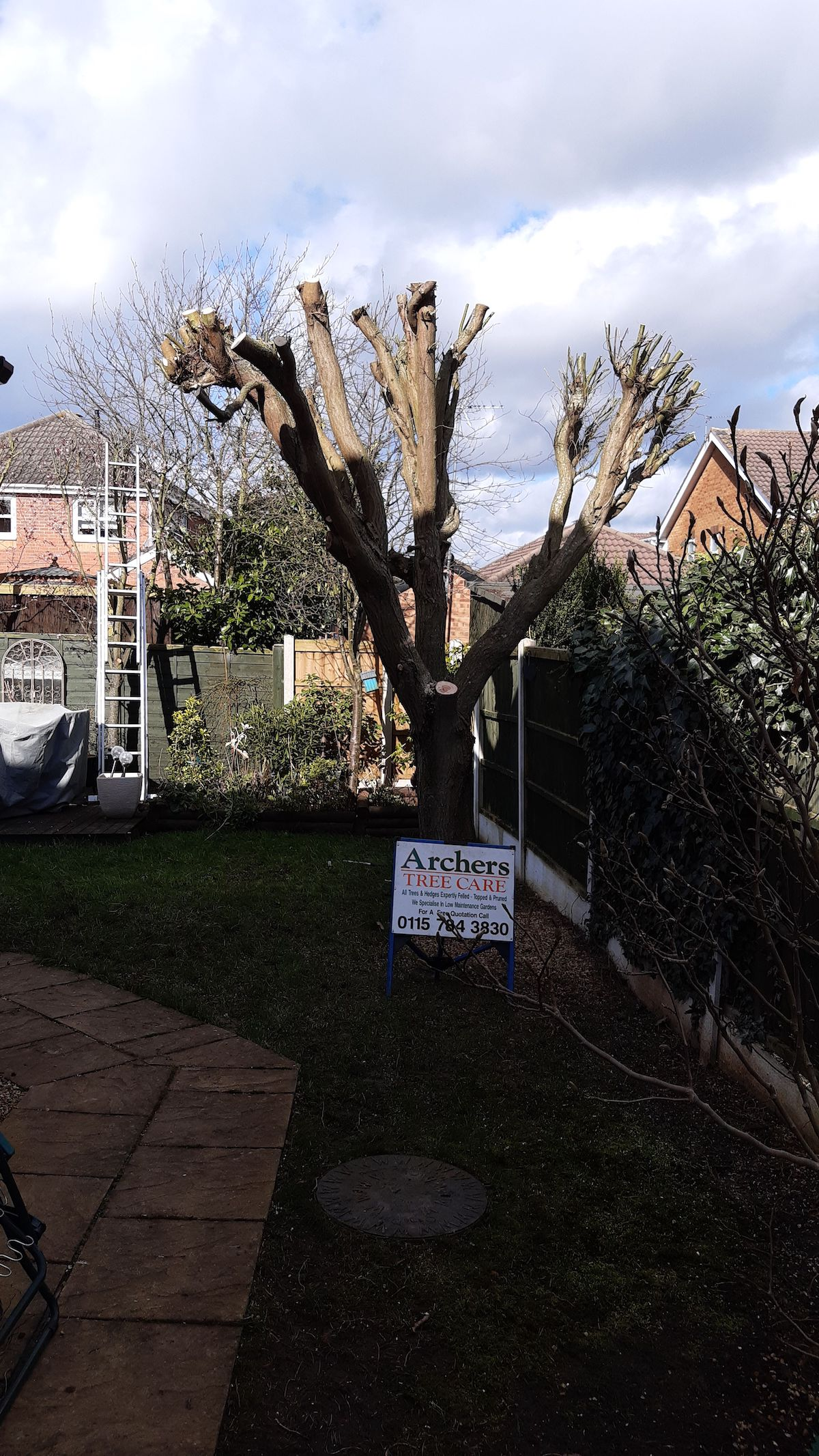 After pruned willow tree in Nottingham